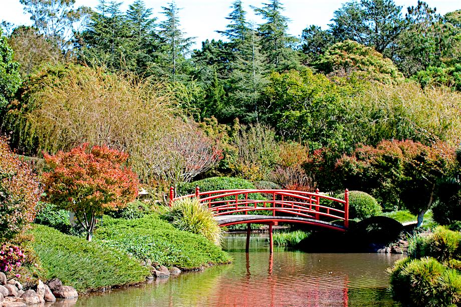 Seven things to do in Toowoomba for garden lovers
